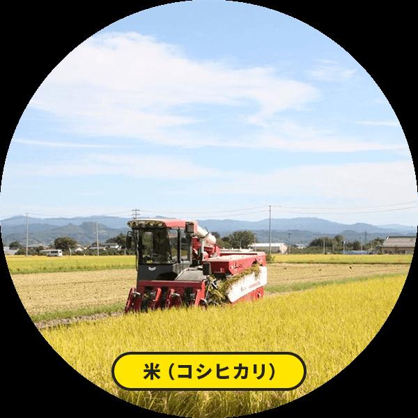 米(コシヒカリ)